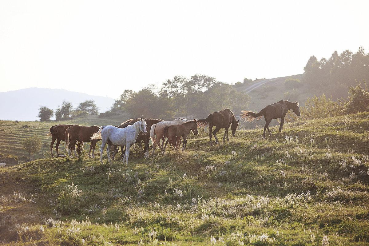 кони на закате - Наталья