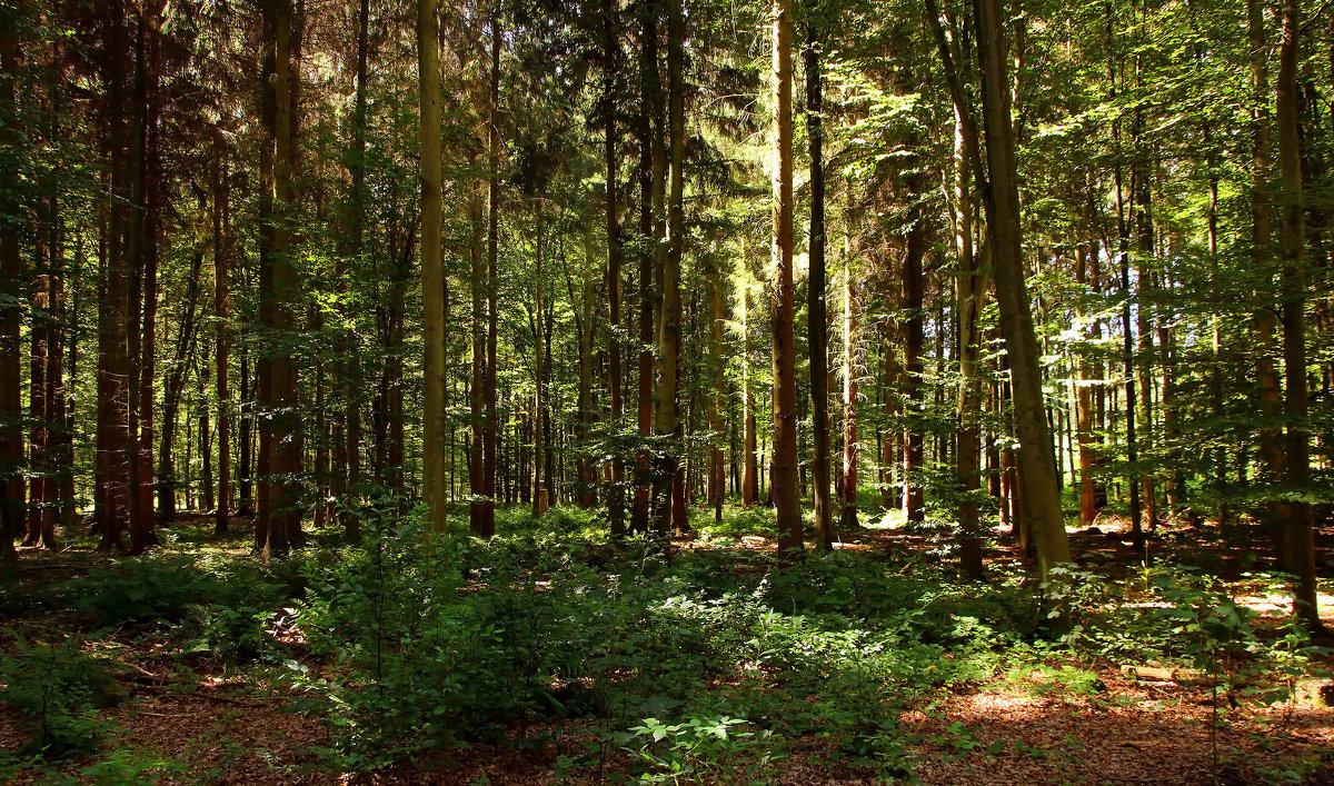 В лесу - Alexander