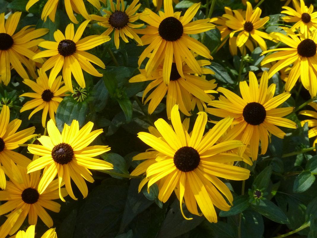 Цветы на клумбе города - Наиля