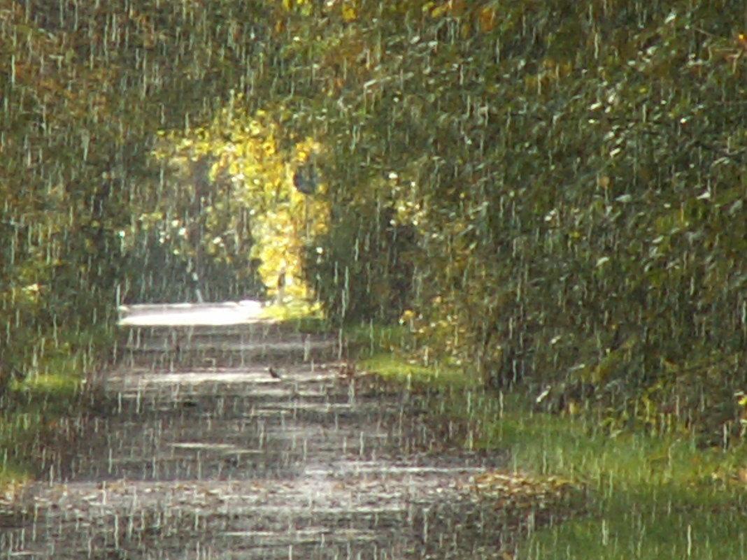 Слепой дождик - Ivolga