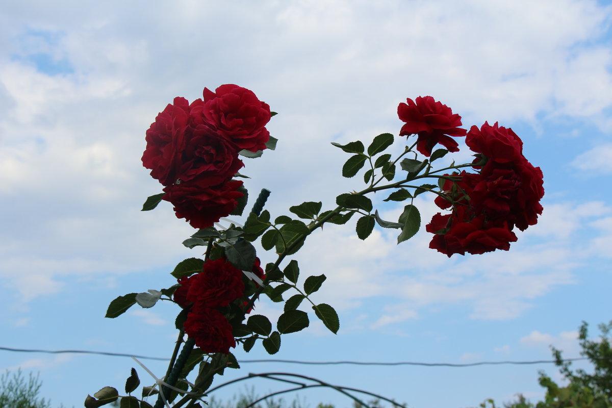Цветы - Ольга)