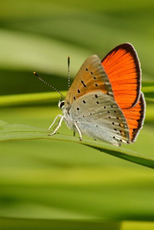 Бабочка - Валерий Подобный