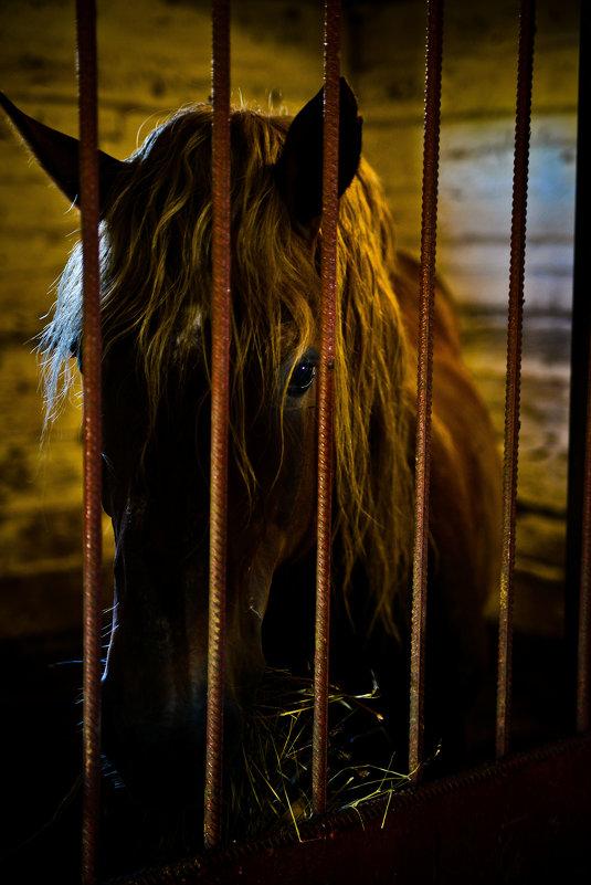 Конь в монастырской конюшне - Валентин Прокудин