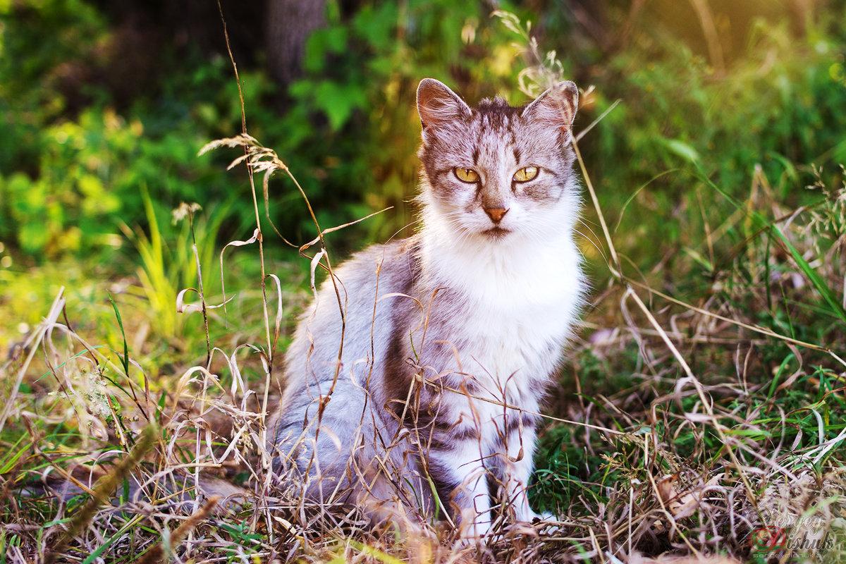 Красавец кот - Сергей Дишук