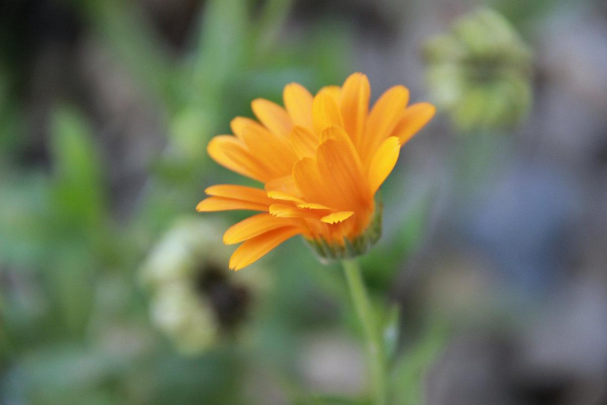 цветок - Tiana Ros