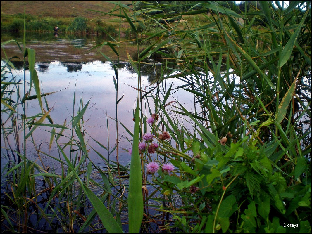 Над водой - Татьяна Пальчикова