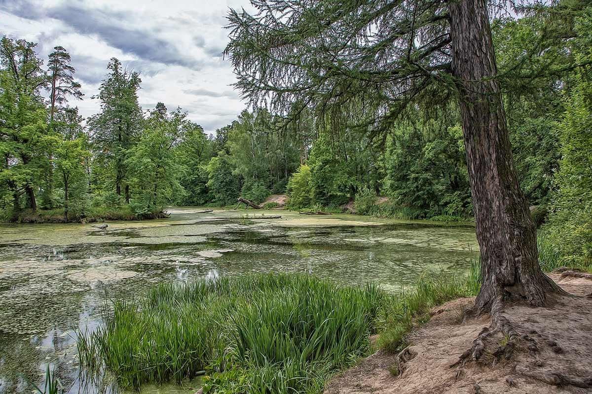 Лесное озеро - Александр Шмалёв