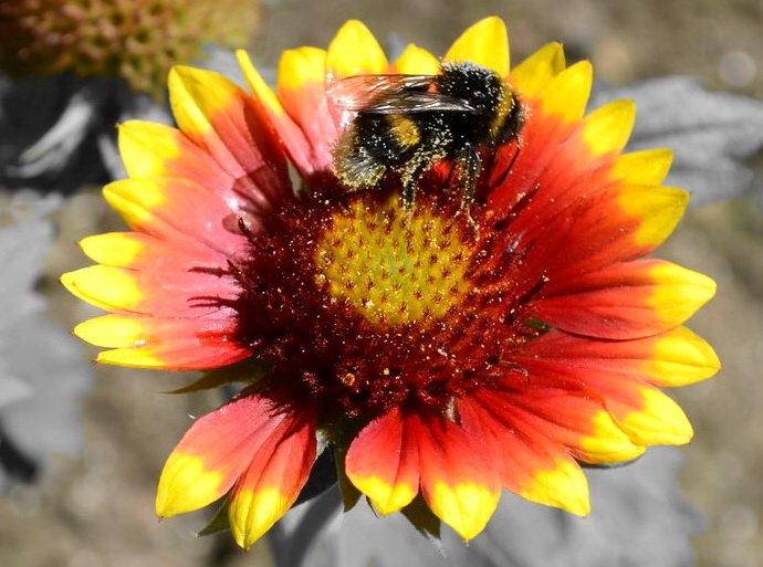 Пчела на цветке - Марина Романова