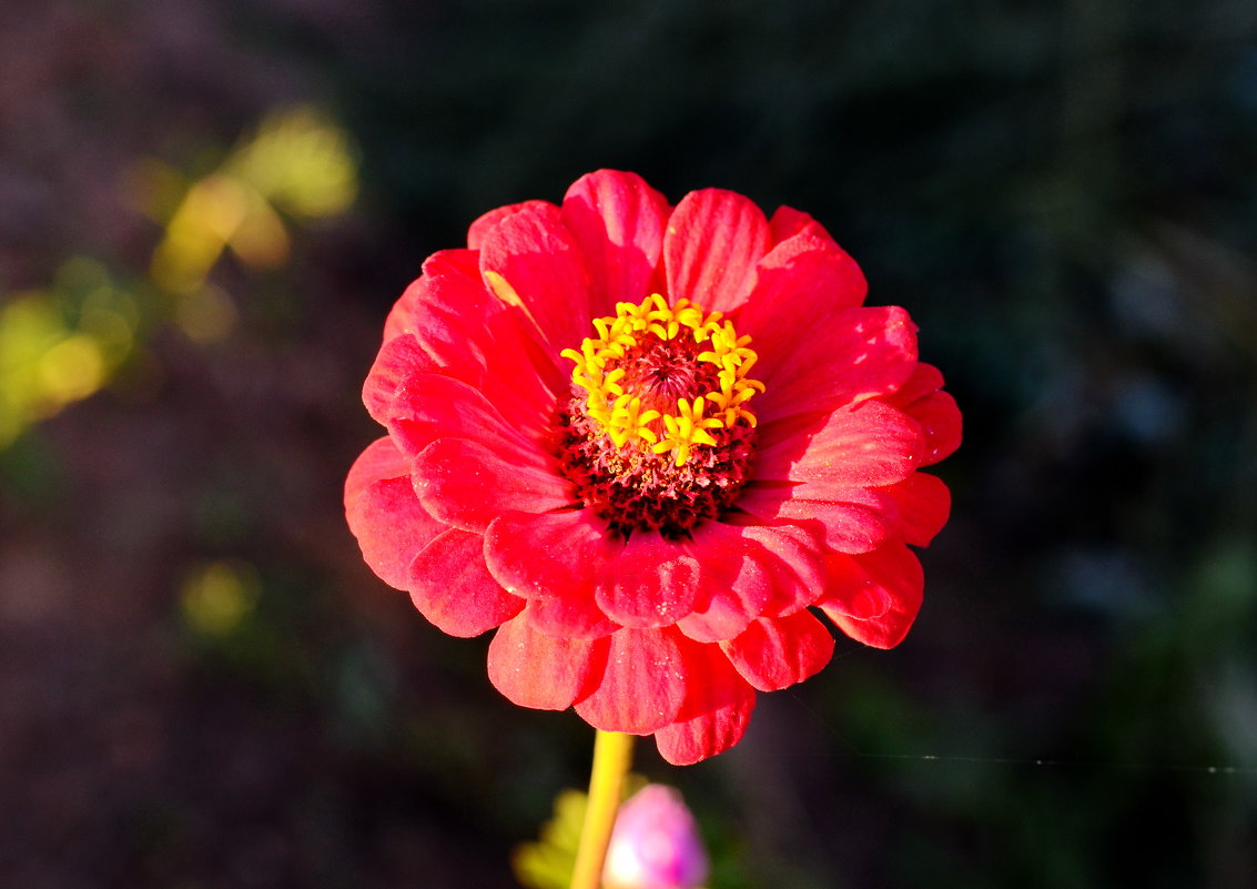 Цветок на закате - Марина Романова