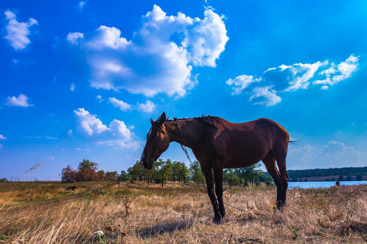 Конь у реки - Artem Zelenyuk