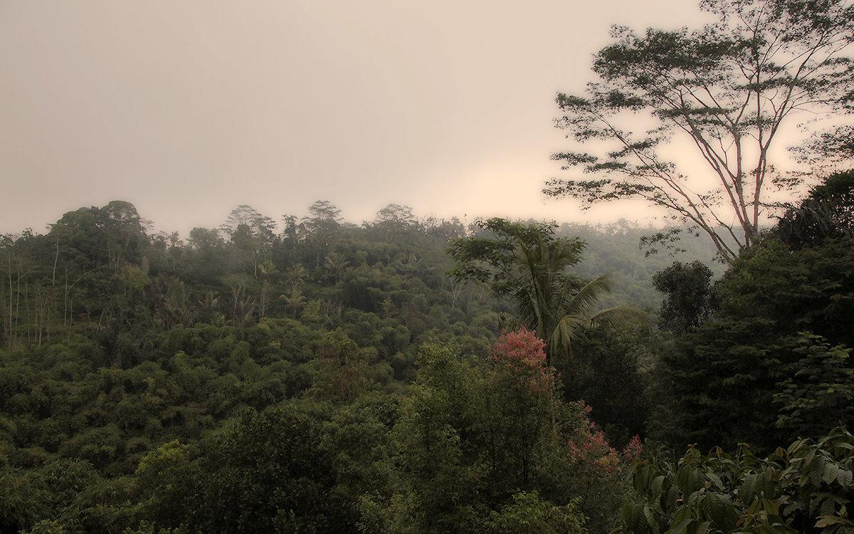 джунгли Бали - Александр