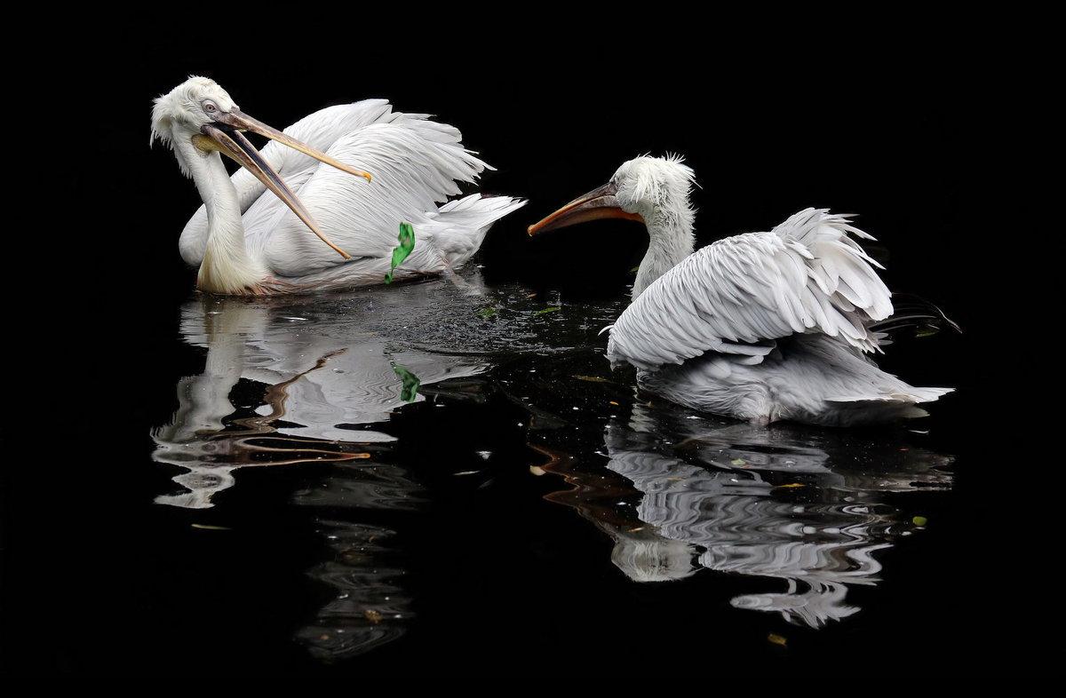 игрушки русских пеликанов - Михаил Бибичков