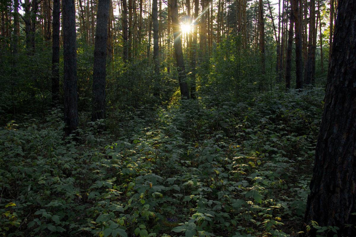 Загадочный лес - Наталья