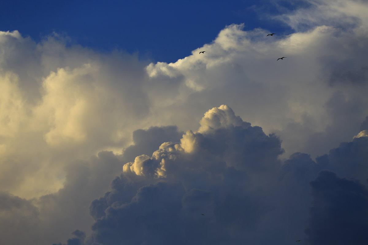Высоко летят над облаками - valeriy khlopunov
