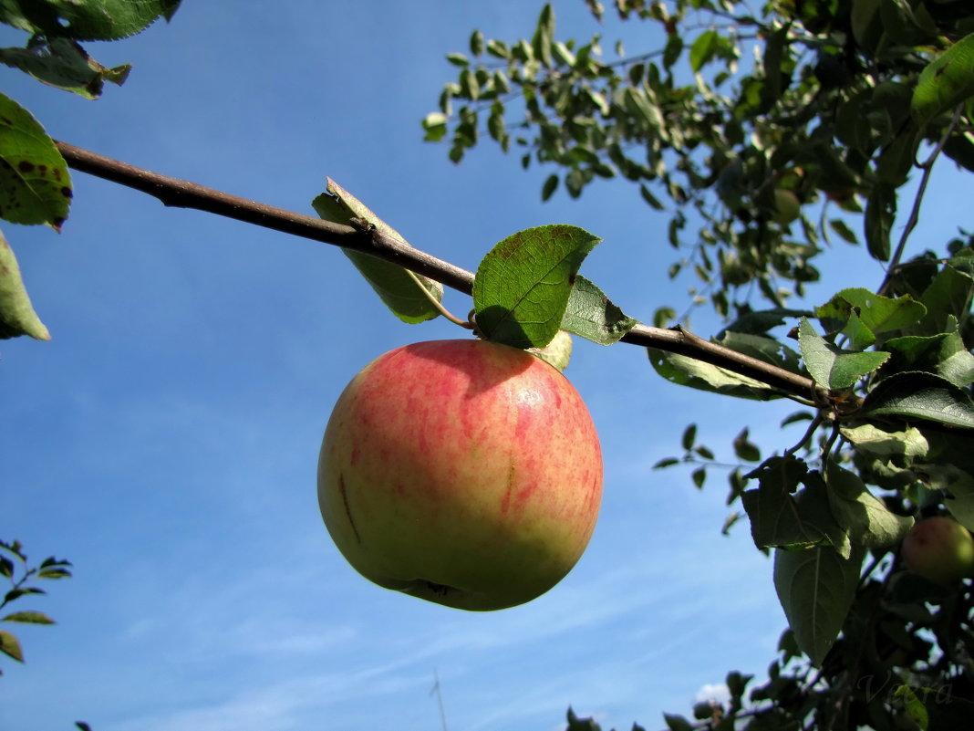 Яблочко - veera (veerra)