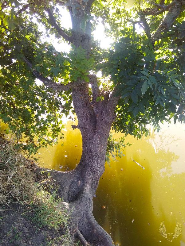 """""""дерево над водой"""" - Райская птица Бородина"""