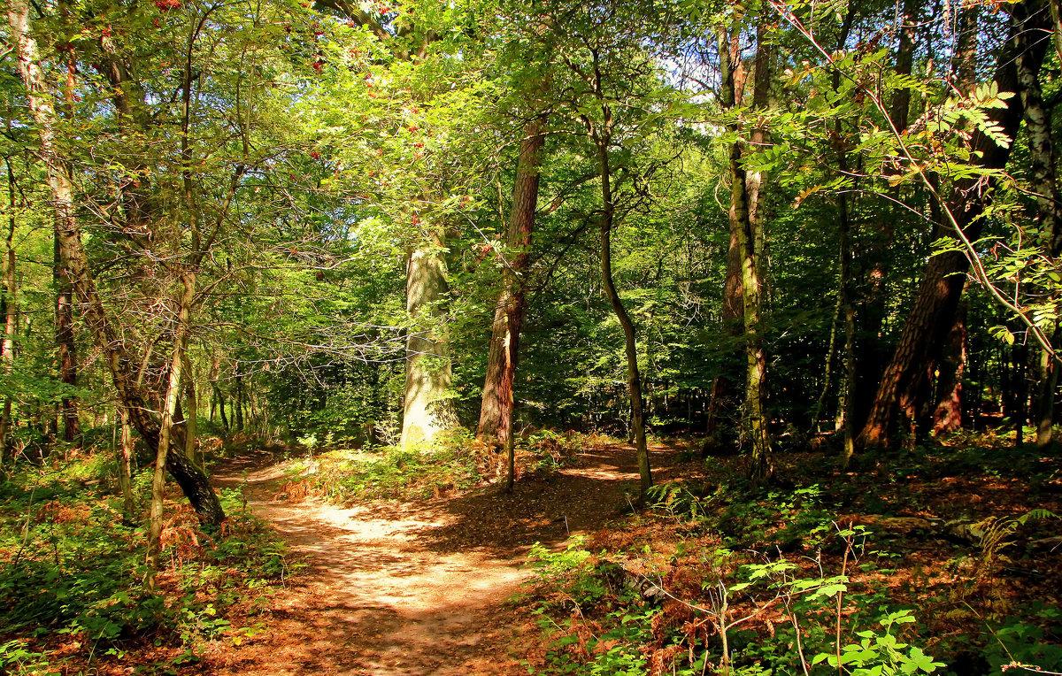 В солнечном лесу - Alexander Andronik