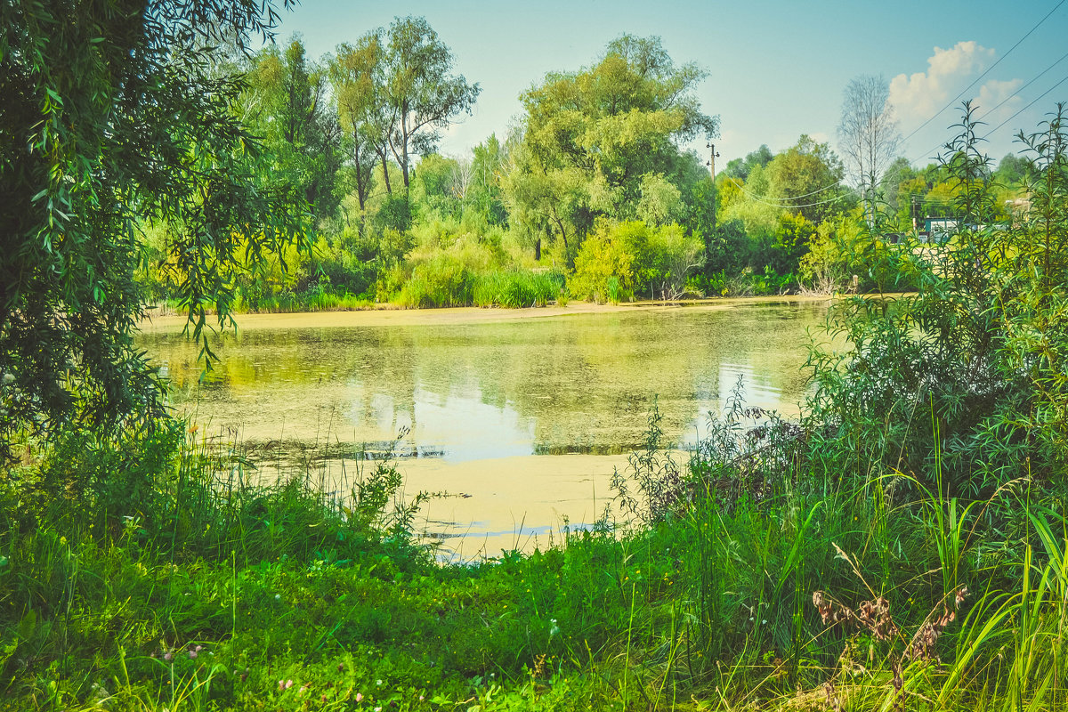 Пруд и травка - Света Кондрашова