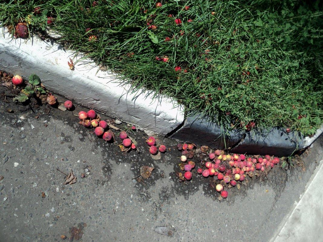Яблочный марафон в городских кварталах. - Ольга Кривых