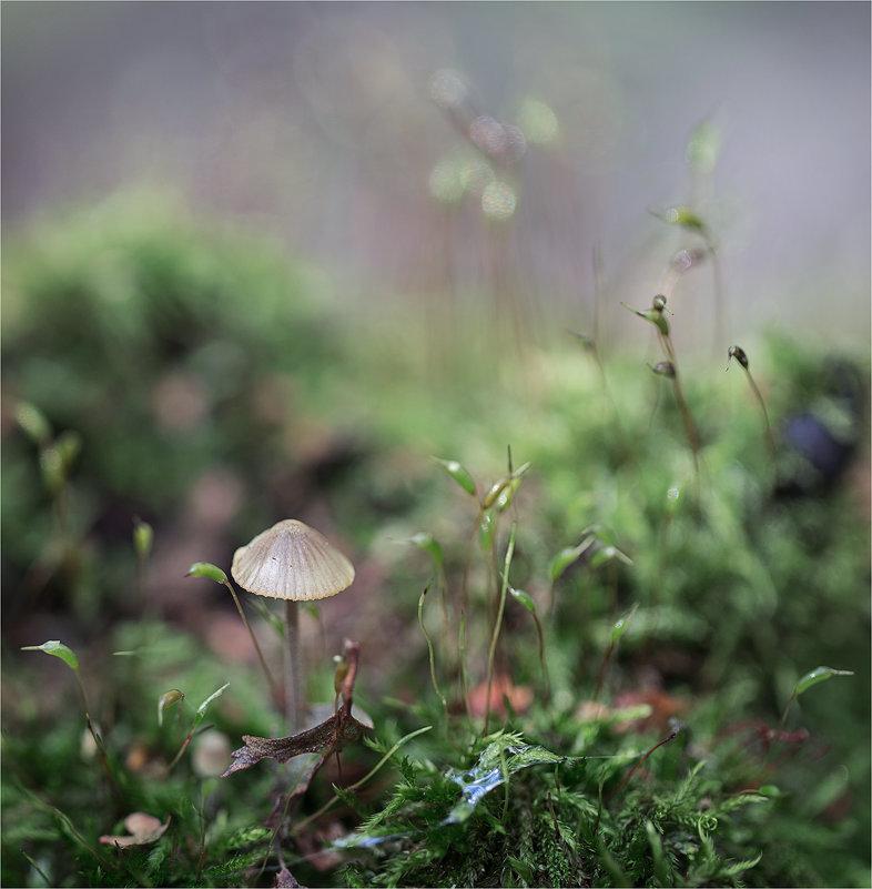 в макро лесу - Эльмира Суворова