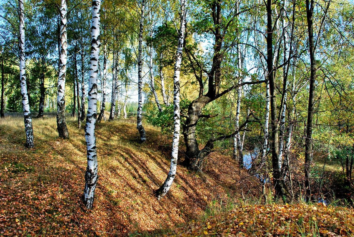 На берегу речки Гусь - Валерий Толмачев
