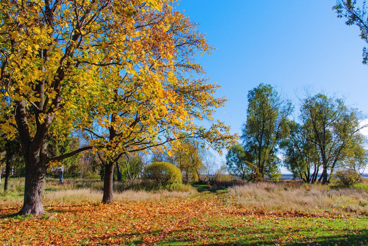 День в октябре - Виталий
