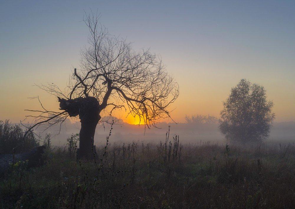 Два дерева - Сергей Корнев