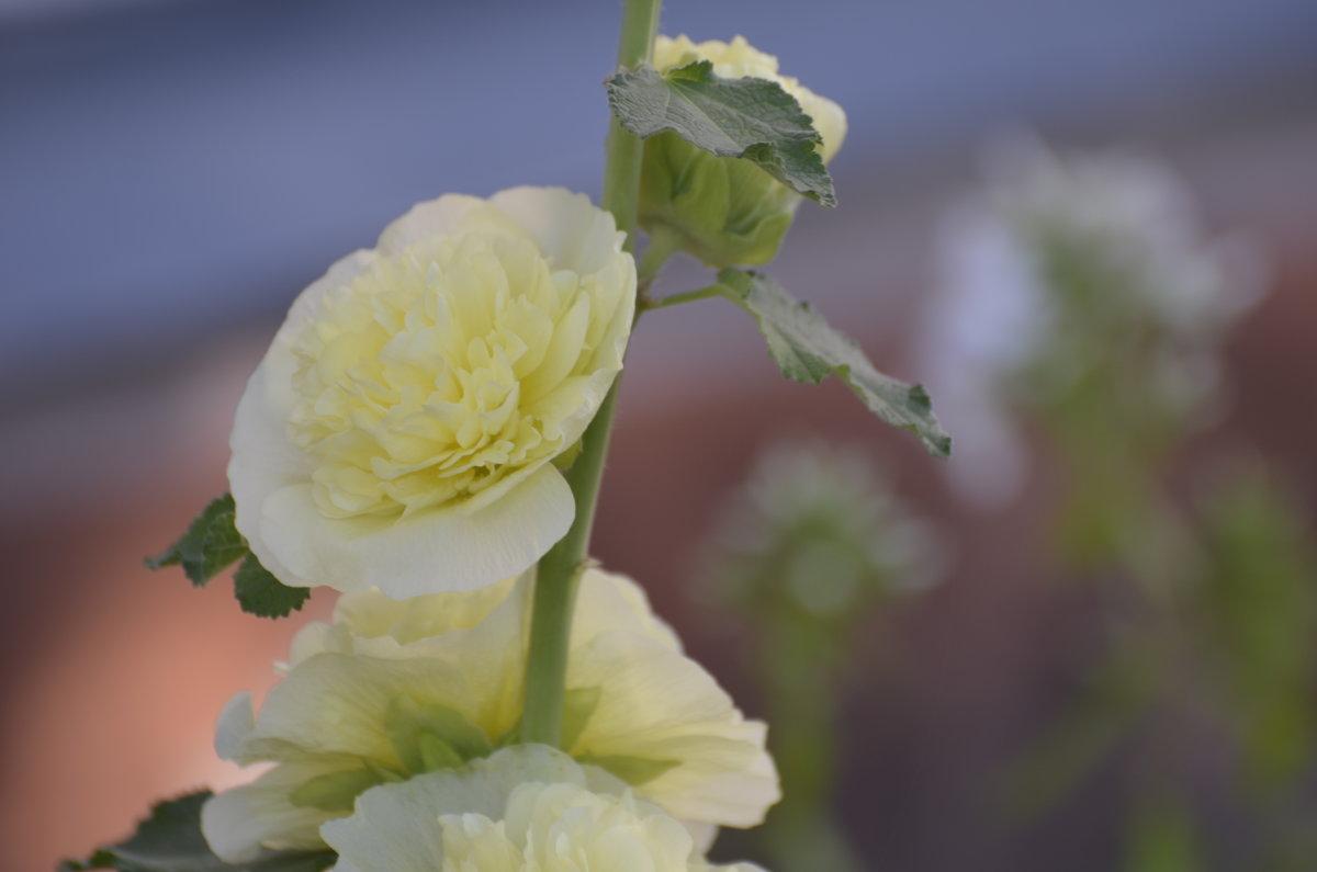 цветок - Михаил Радин
