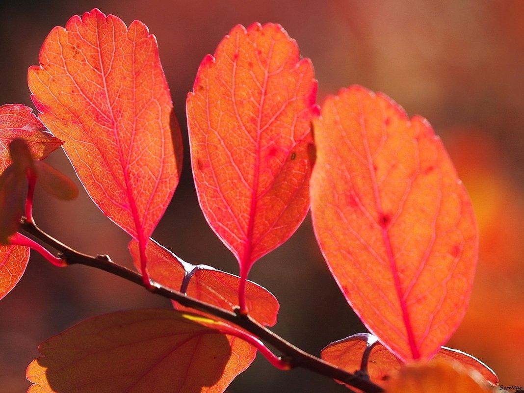 Яркая осень - Swetlana V