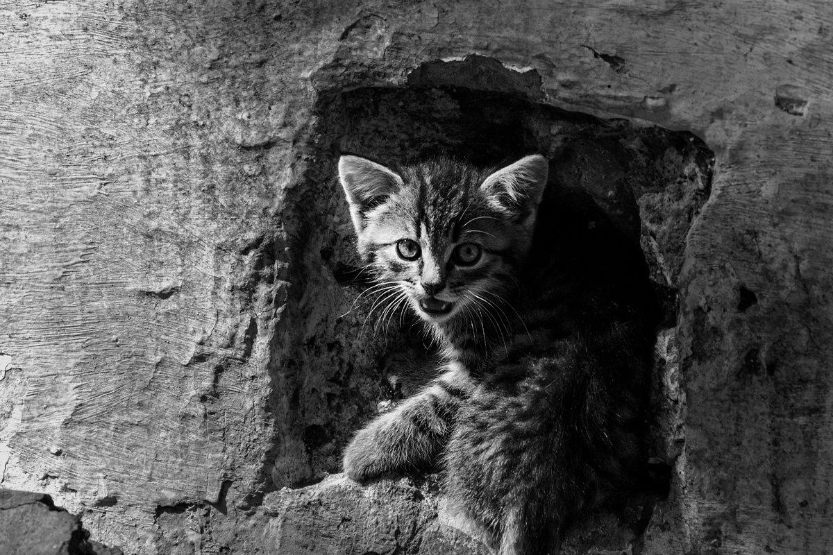 Котята - Yuri Silin