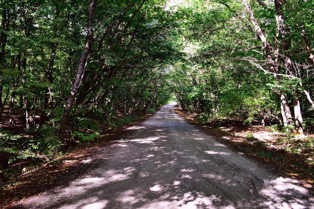 Дорога в лесу - Виктор Шандыбин