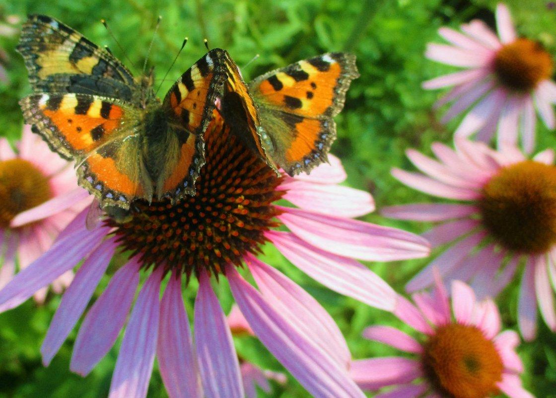 Цветок из бабочек. - Valentina