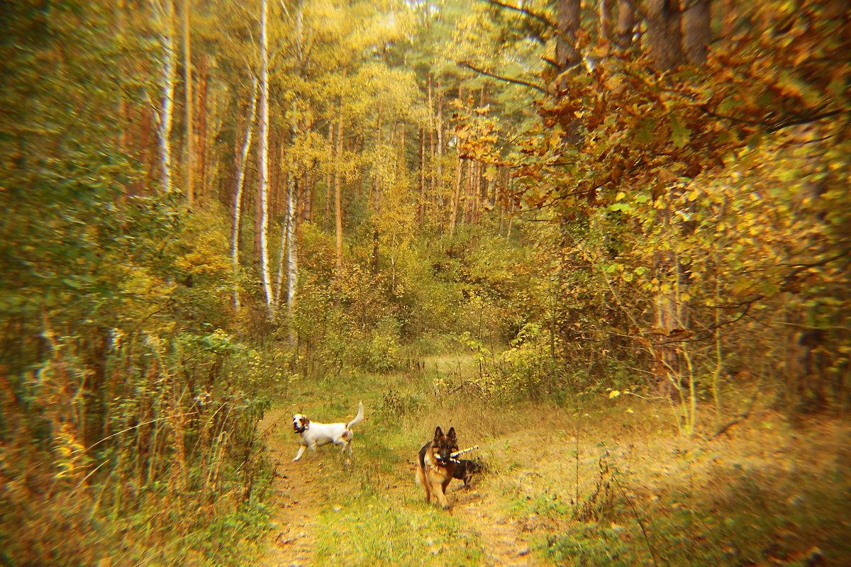 Осень в лесу. - Маргарита ( Марта ) Дрожжина