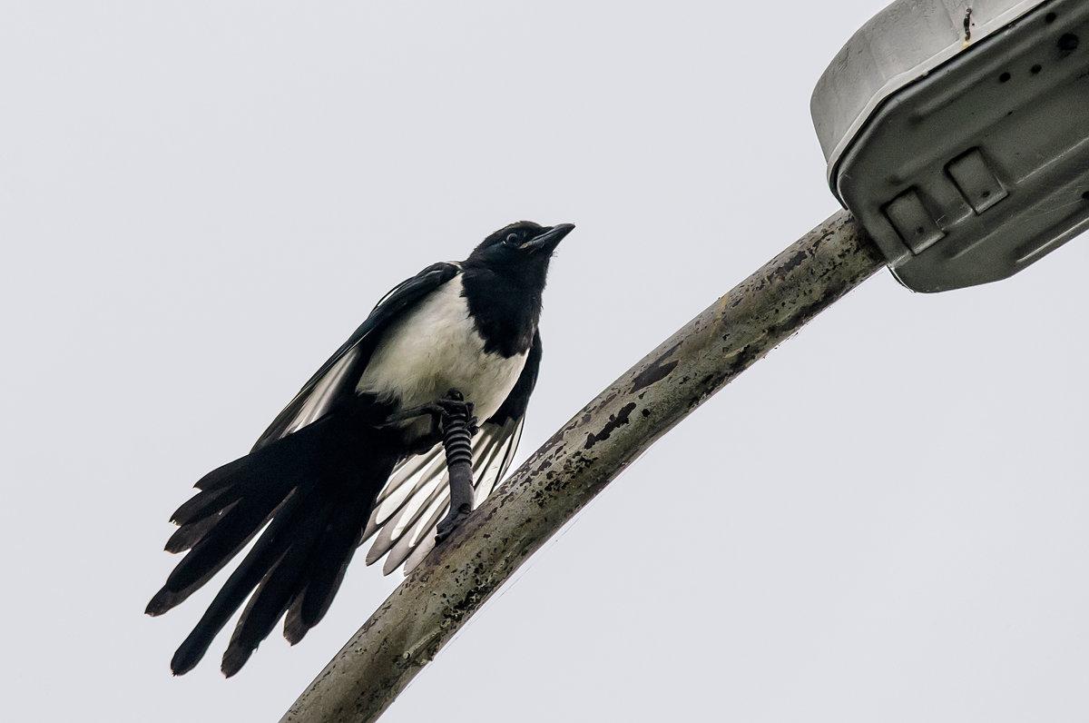 Птица, фонарь. - Виктор Иванович