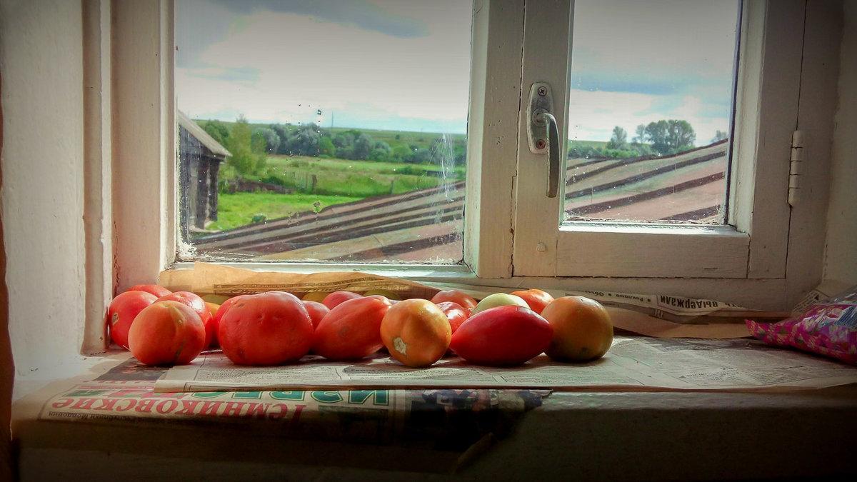 Урожай на окне - Денис Антонов