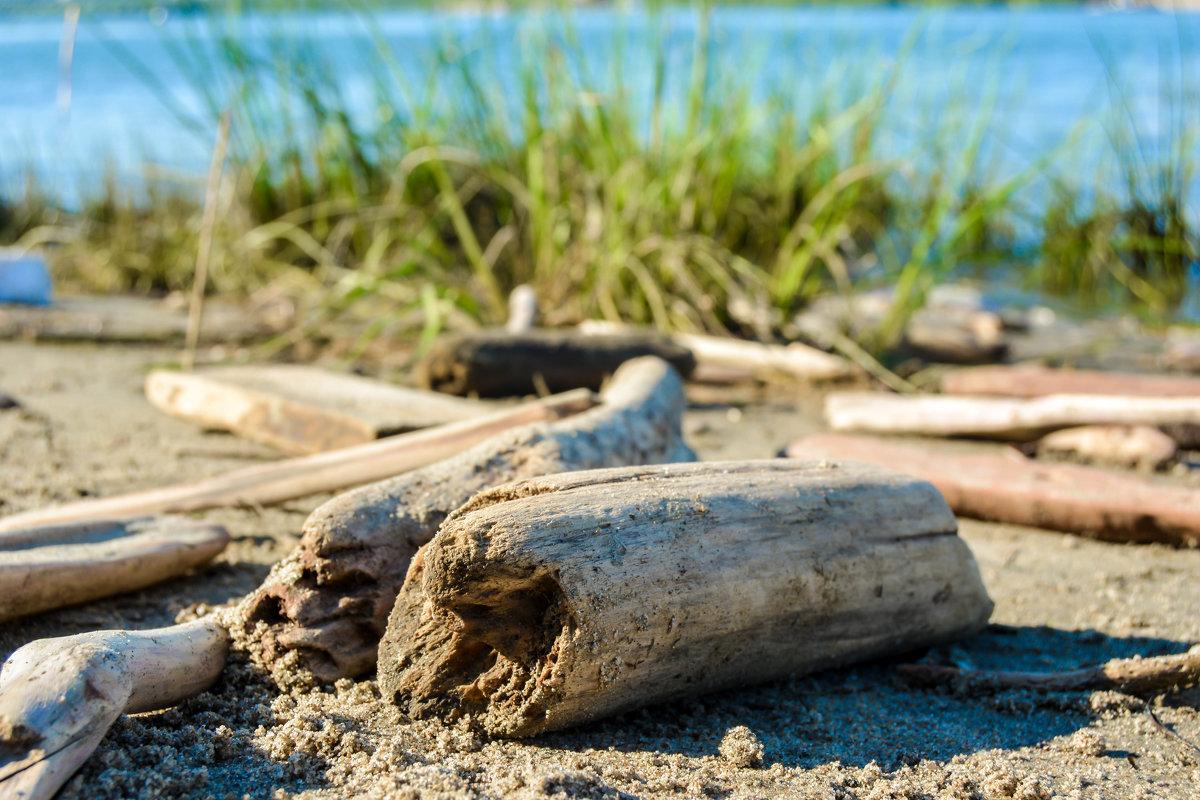 брёвна на берегу - Света Кондрашова