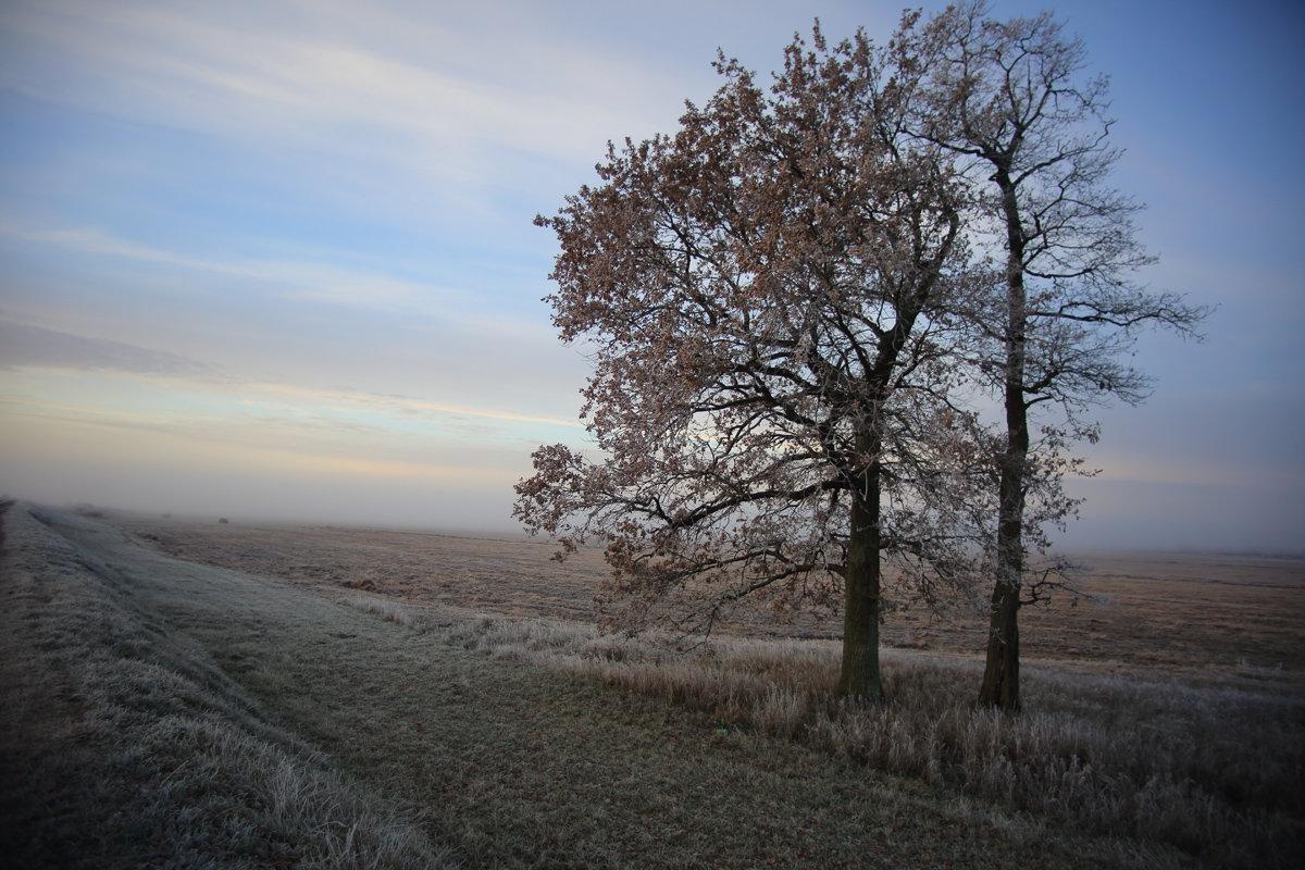 Туманный расвет - Константин Pasko
