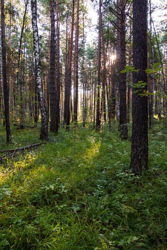 Солнце в лесу - Тамара Гераськова