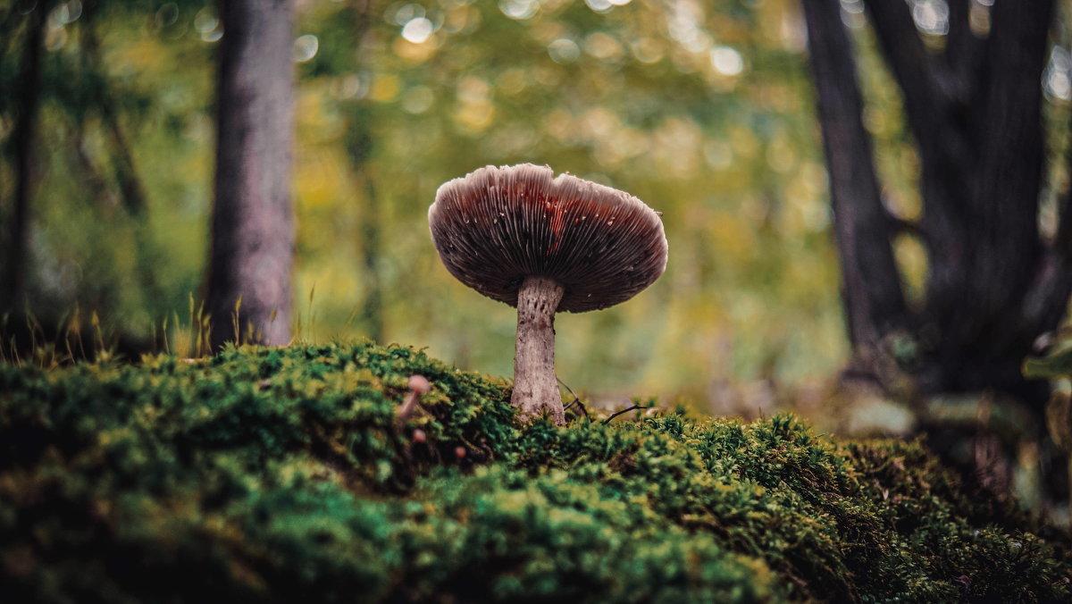 очередной гриб - Эдуард Куклин
