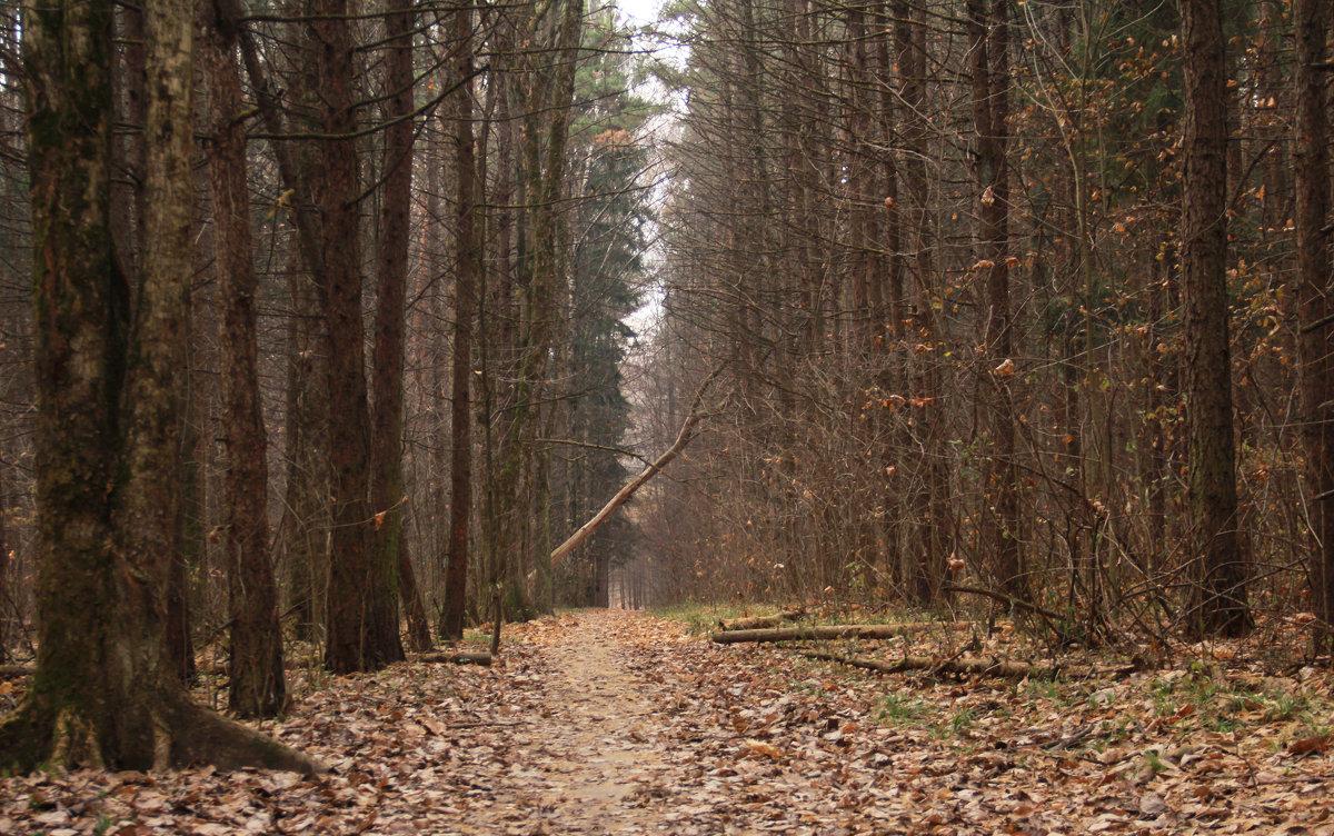 в лесу - Людмила Деревянко