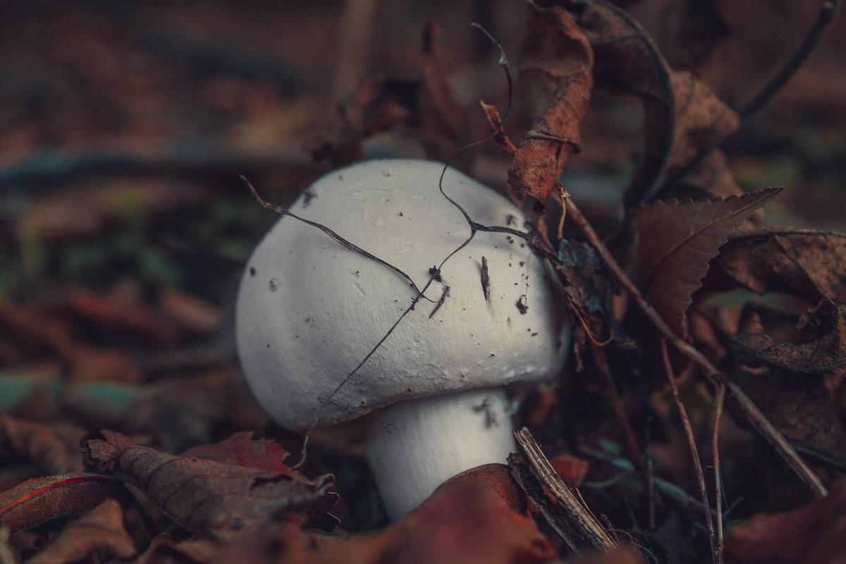 гриб - сергей мыряха