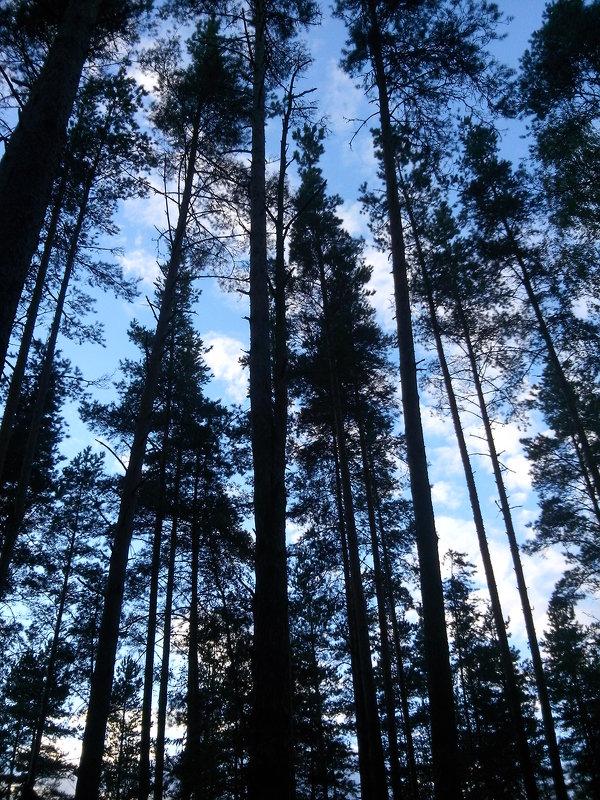 Однажды в лесу - Ольга Мореходова