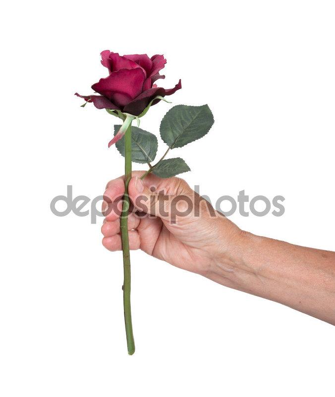 roza - artur