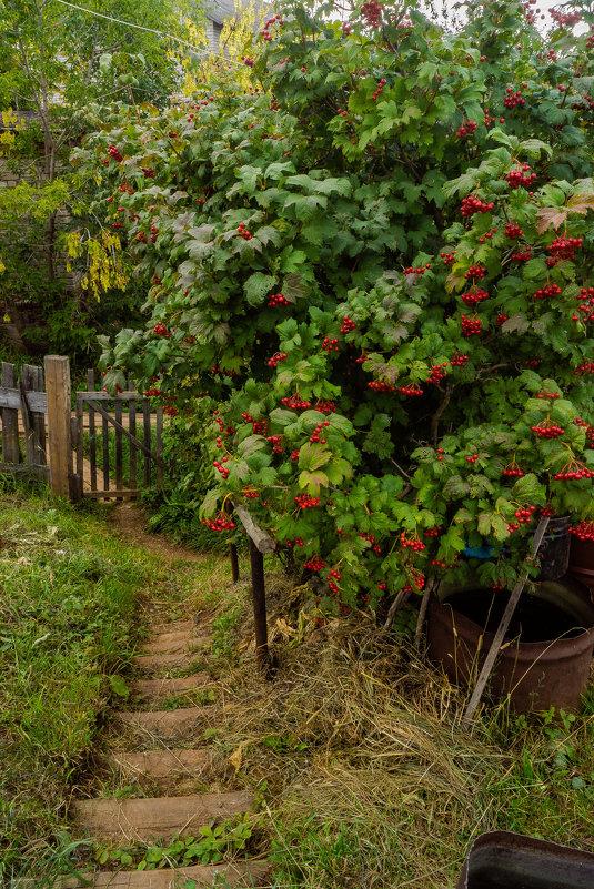 В огороде, тропка - Валерий Симонов