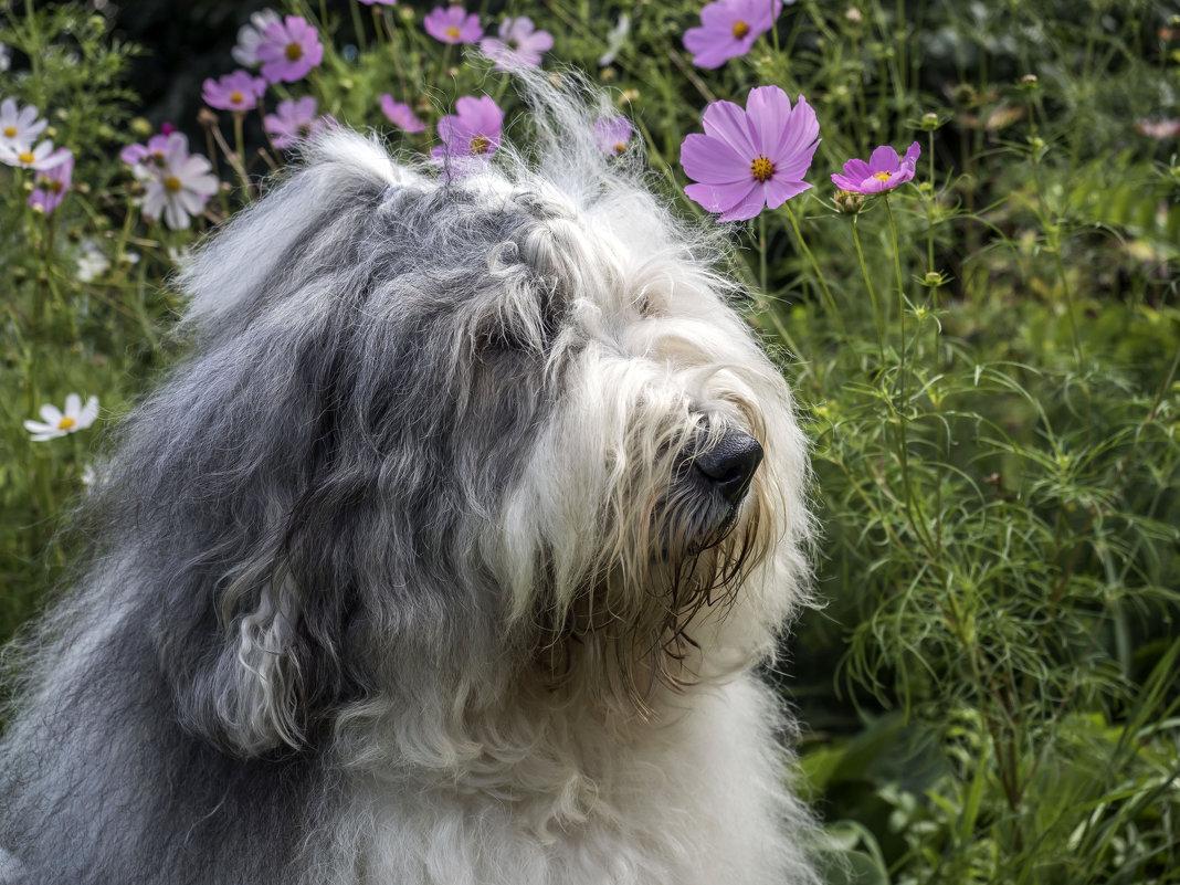 Манечка в цветах - Лариса Батурова