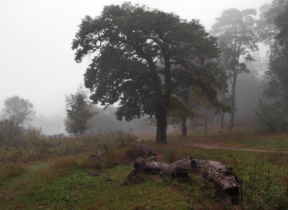 Тумана зыбкие границы... - Лесо-Вед (Баранов)