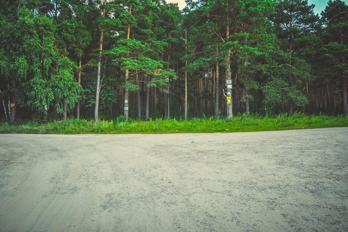 Лес - Света Кондрашова