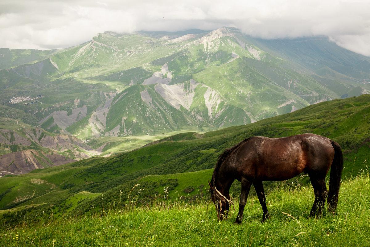 Конь в горах - Анзор Агамирзоев