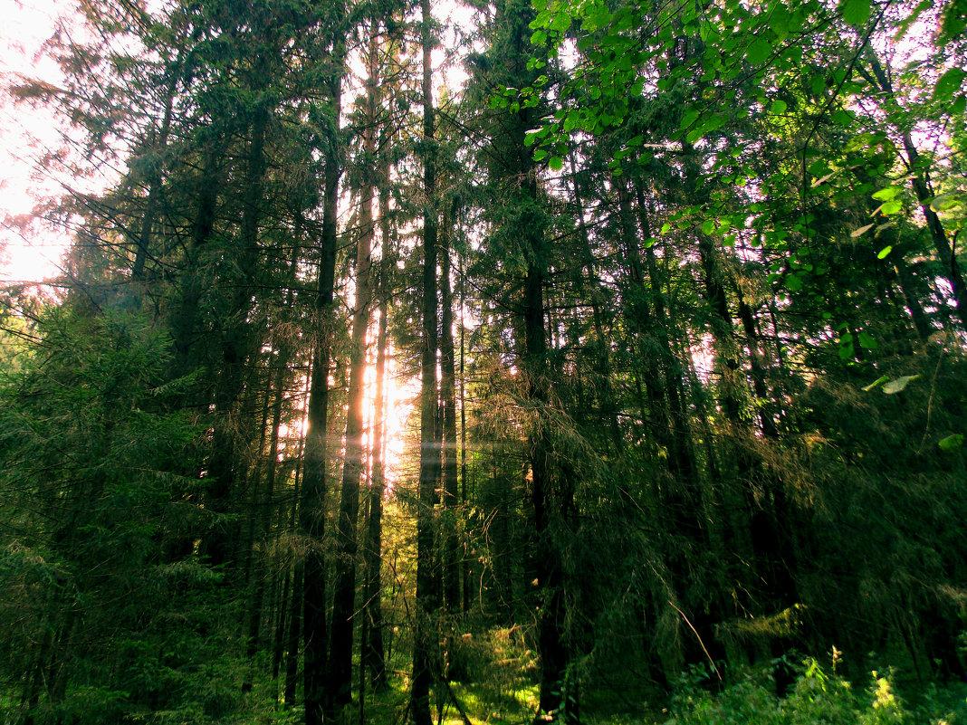 Всё еще зеленый, но уже осенний лес - Александра Кускова