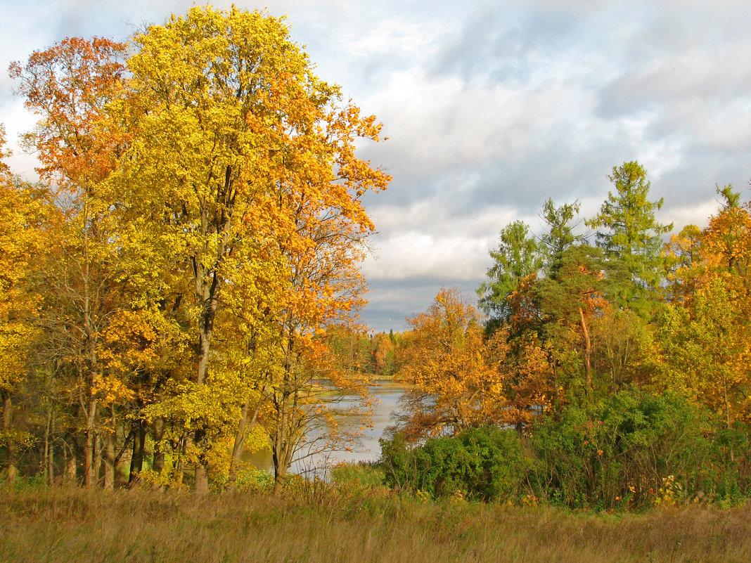 Золотая осень - максим лыков